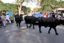 Photo of ضلع جہلم کے داخلی وخارجی راستوں پر مویشی چیک پوسٹس قائم کی جائیں۔ شہری حلقے