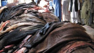 Photo of جہلم میں قربانی کی کھالوں کے اجازت نامے لینے والے رل گئے