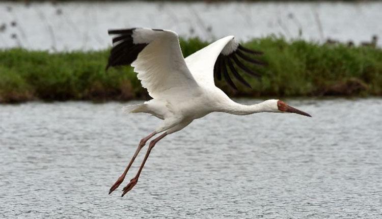 Photo of سائبیریا سے ہجرت کرنے والے ہزاروں پرندے منگلا ڈیم اور لہڑی پارک پہنچ گئے