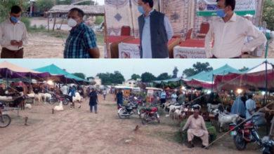 Photo of جہلم میں قائم مویشی منڈیوں میں عوام کے لئے سہولیات فراہم کی گئی ہیں۔ راؤ پرویز اختر